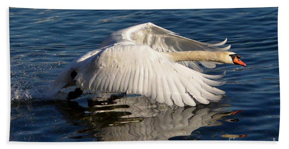 Swan Beach Towel featuring the photograph Swan by Mats Silvan