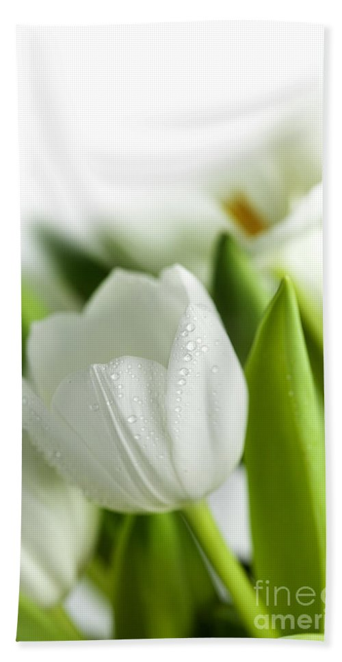 Dew Beach Towel featuring the photograph White Tulips by Nailia Schwarz