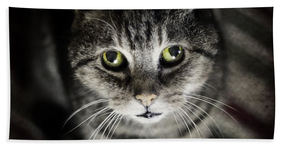 Cat Beach Towel featuring the photograph Wonky Eyed Tiger by Angel Ciesniarska