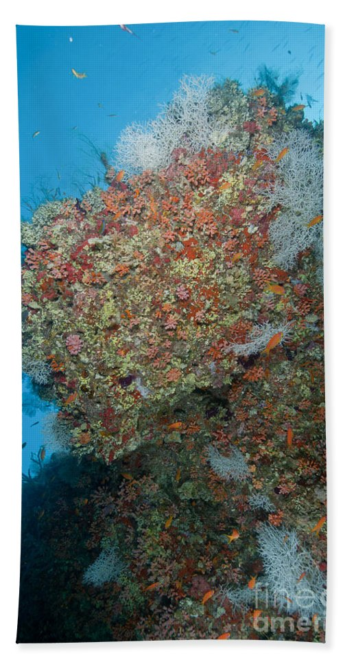 Maldives Beach Towel featuring the photograph Colourful Reef Scene, Ari And Male by Mathieu Meur