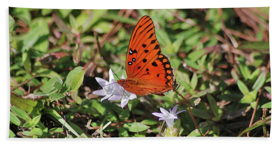 Fritillary Butterfly Beach Towel featuring the photograph 42- Fritillary Butterfly by Joseph Keane