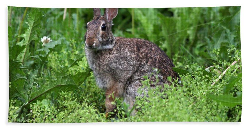 Wildlife Beach Towel featuring the photograph Rabbit by Lori Tordsen