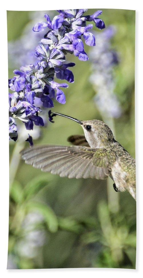 Annas Hummingbird Beach Towel featuring the photograph Hummingbird by Saija Lehtonen