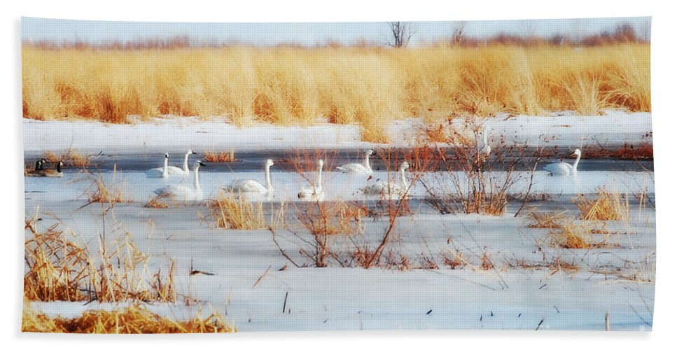 Landscape Beach Towel featuring the photograph 7 Swans Swimming by Peggy Franz