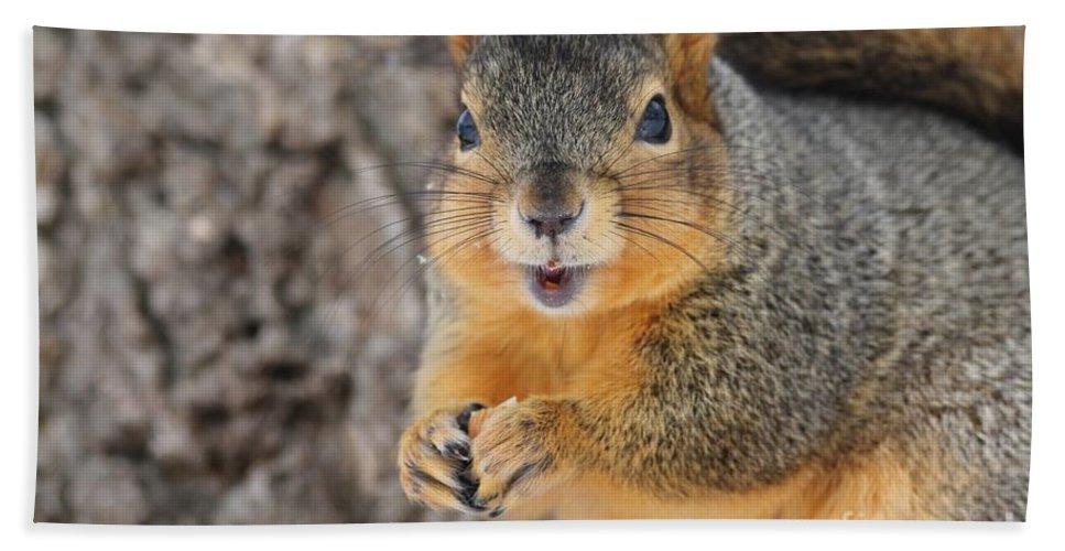 Squirrel Beach Towel featuring the photograph Squirrel by Lori Tordsen
