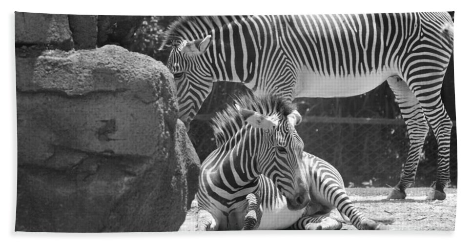 Animal Beach Towel featuring the photograph Zebras In Black And White by Rob Hans