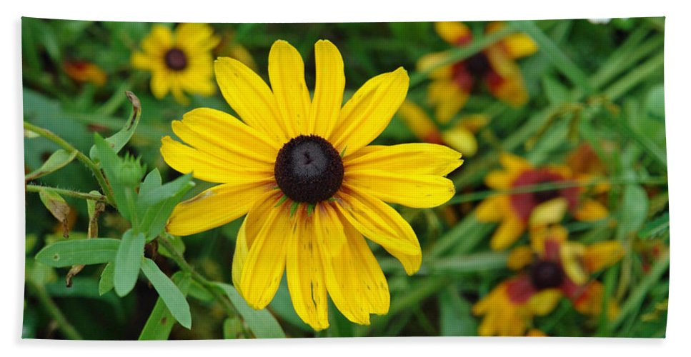 Flower Beach Towel featuring the photograph A Beautiful Close Up Of A Sunflower by Ashish Agarwal