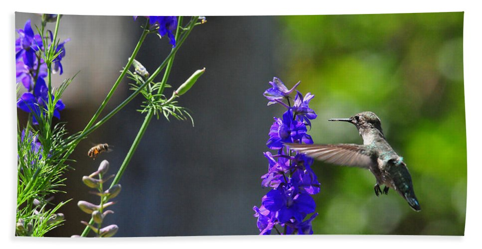Hummers Beach Towel featuring the photograph A Bird And A Bee by Lynn Bauer
