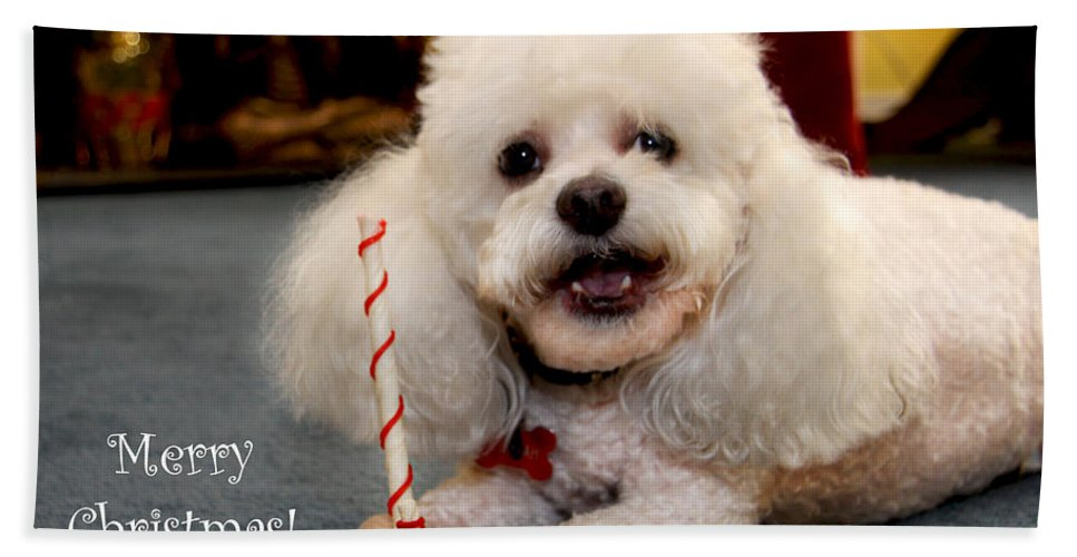 Dog Beach Towel featuring the photograph A Candycane For Puppy by Diana Haronis