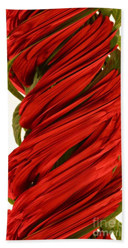 Flower Beach Towel featuring the photograph A Digital Streak Image Of A Pointsetta by Ted Kinsman