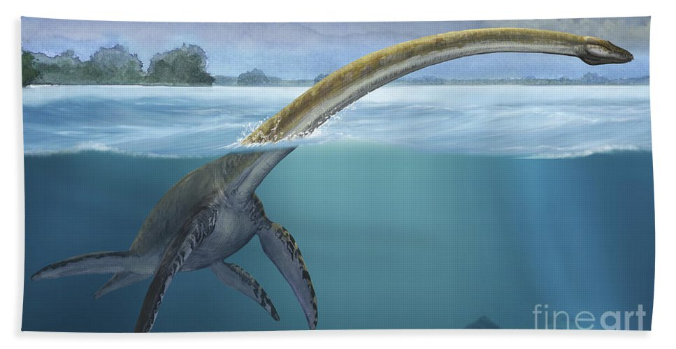 a elasmosaurus platyurus swims freely beach towel for sale by sergey