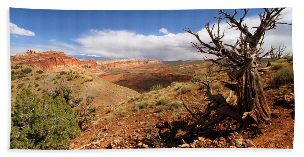 Capitol Reef National Park Beach Towel featuring the photograph A Hard Life by Adam Jewell