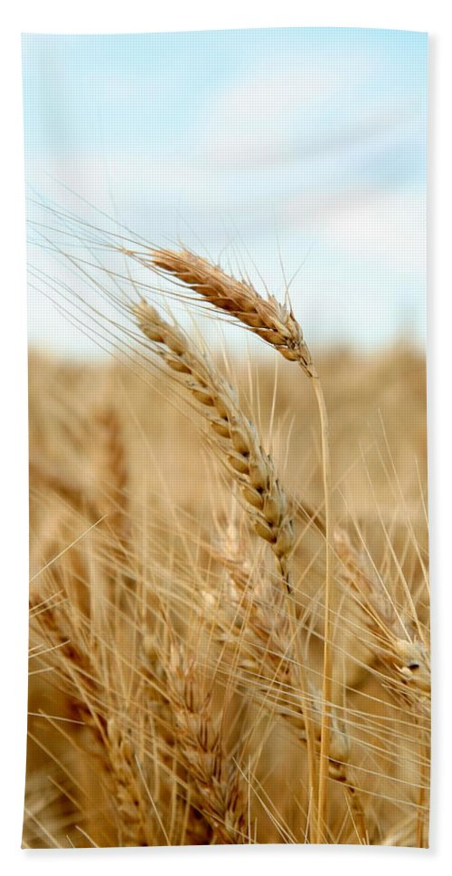 Wheat Beach Towel featuring the photograph A Head Taller by Andrew Dyer Photography
