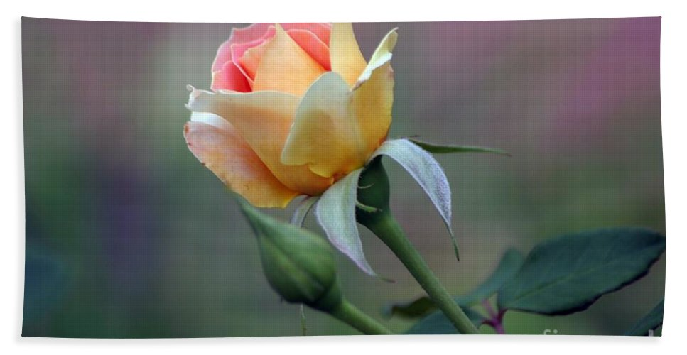 Rose Beach Towel featuring the photograph A New Day by Living Color Photography Lorraine Lynch