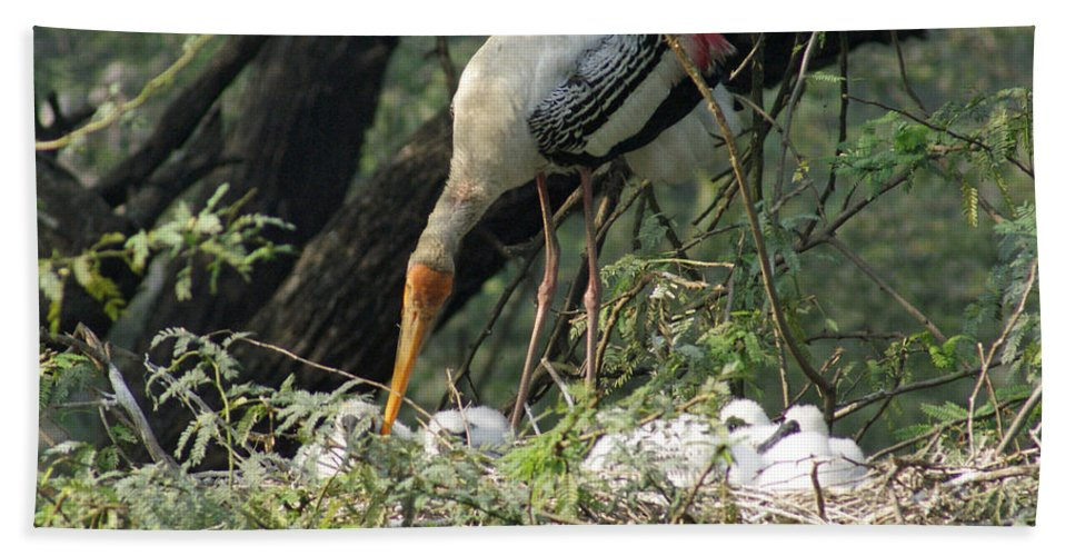 Delhi Beach Towel featuring the photograph A Painted Stork Feeding Its Young At The Delhi Zoo by Ashish Agarwal
