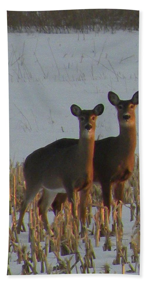 Deer Beach Towel featuring the photograph A Perfect Pair by Peggy McDonald