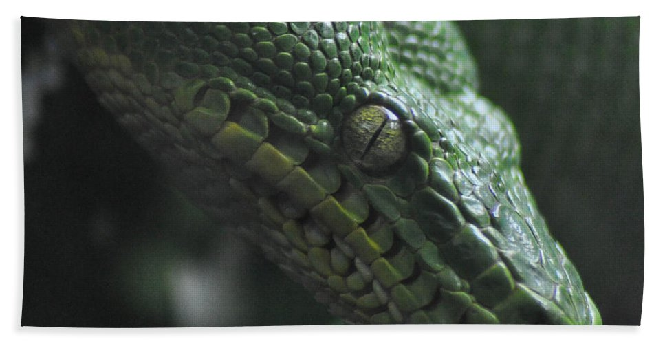 Snake Beach Towel featuring the photograph A Real Reptile by Trish Tritz