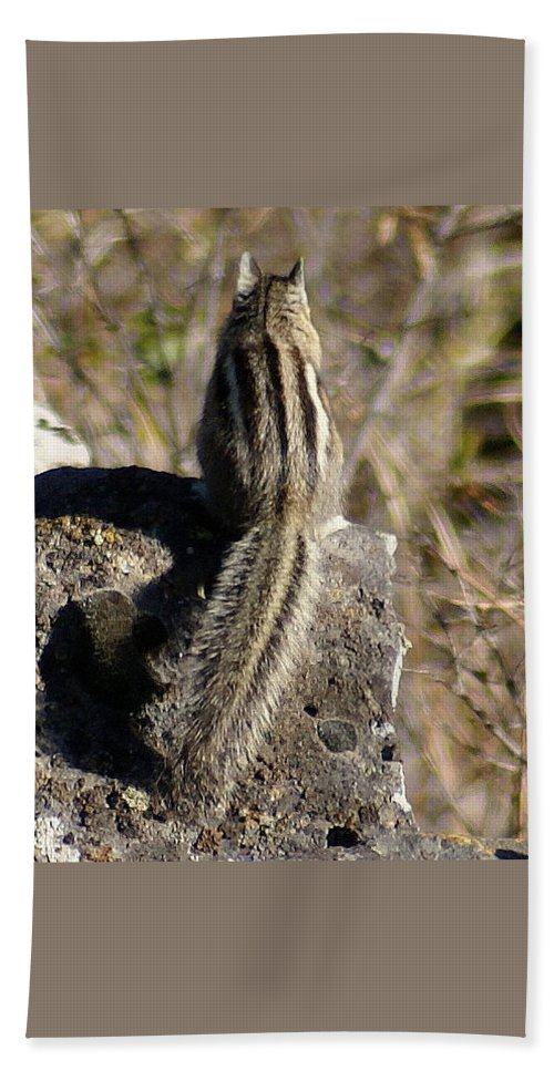Chipmunks Beach Towel featuring the photograph A Tail Untold by Ben Upham III