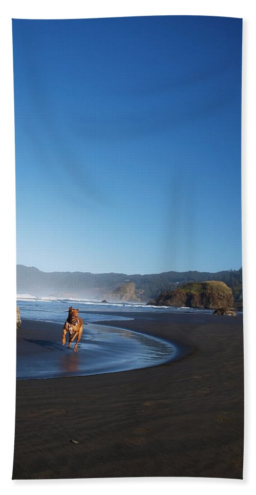 Oregon Beach Towel featuring the photograph Abby The Great by Teri Schuster
