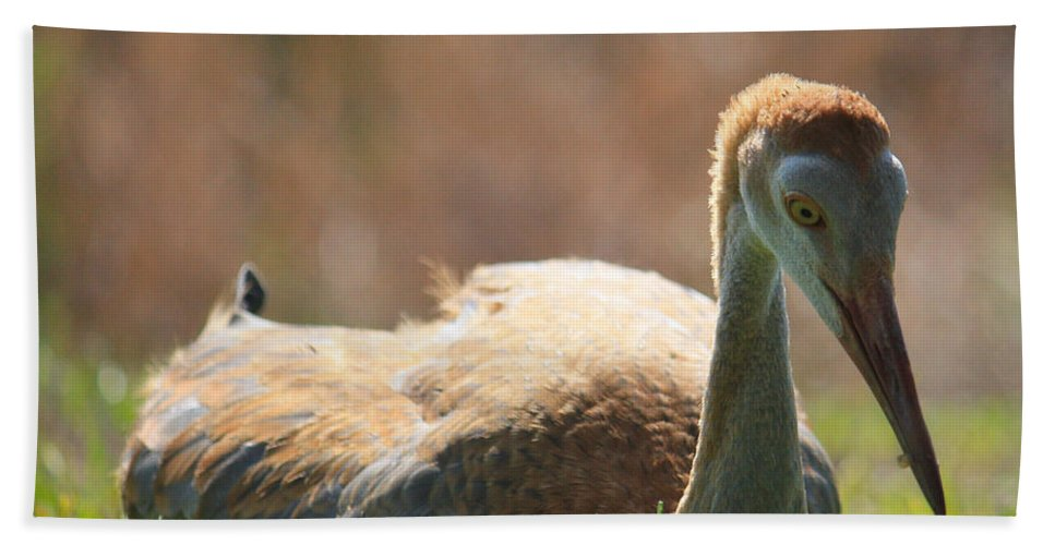 Resting Beach Towel featuring the photograph Afternoon Reprieve by Carol Groenen