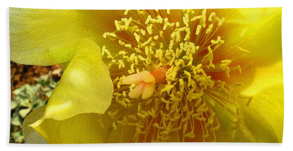 Agave Beach Towel featuring the photograph Agave 2010 by Joyce Dickens