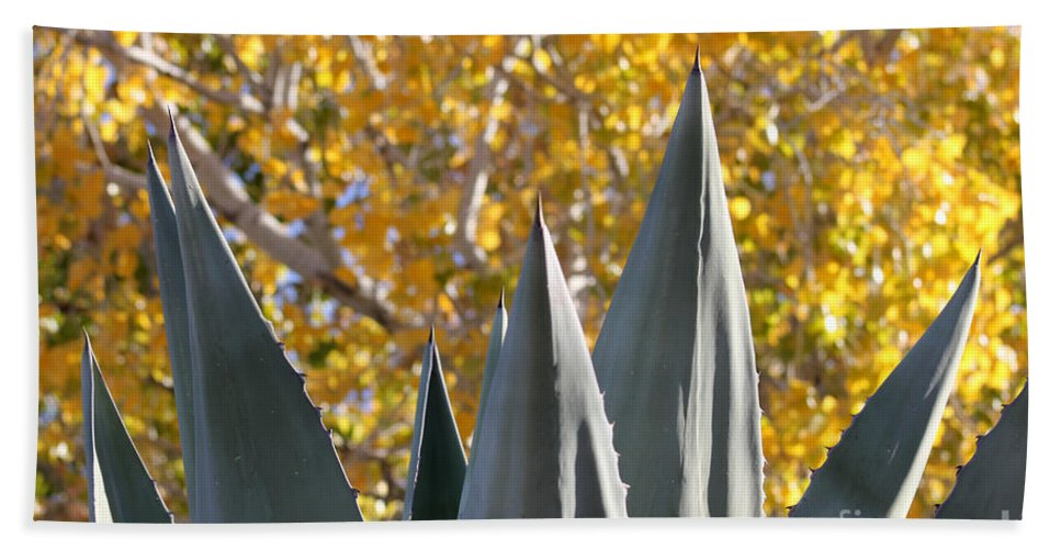 Agave Beach Towel featuring the photograph Agave Spikes In Autumn by Alycia Christine