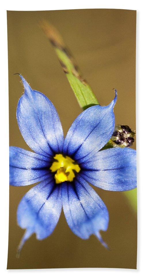 Blue-eyed Grass Beach Towel featuring the photograph Alabama Blue-eyed Grass Wildflower - Sisyrinchium Angustifolium by Kathy Clark
