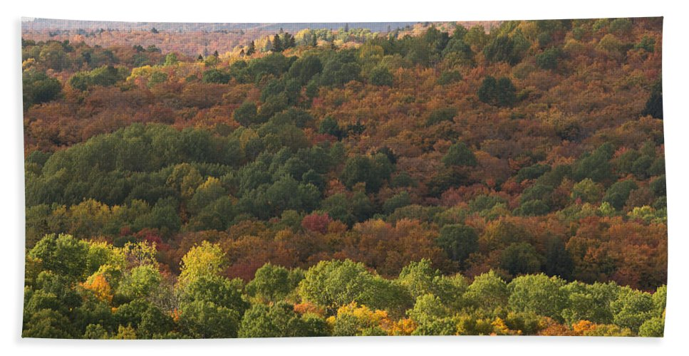 Fall Beach Towel featuring the photograph Algonquin In Autumn by Cale Best