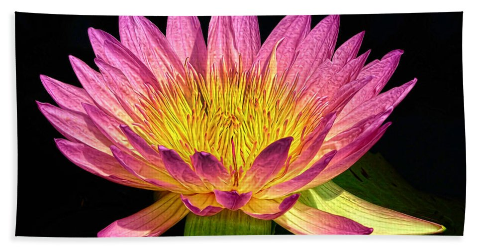 Waterlily Beach Towel featuring the photograph Alive With Color by Dave Mills