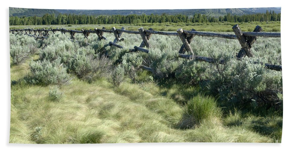 Grand Teton National Park Beach Towel featuring the photograph Along The Fence by Sandra Bronstein