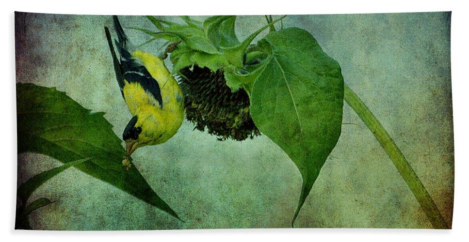 Bird Beach Towel featuring the photograph American Goldfinch II by Sandy Keeton