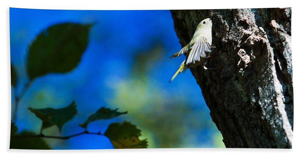 American Goldfinch Beach Towel featuring the photograph American Goldfinch Leaving by Edward Peterson