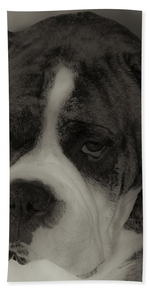Boxer Beach Towel featuring the photograph Angelic Boxer by DigiArt Diaries by Vicky B Fuller