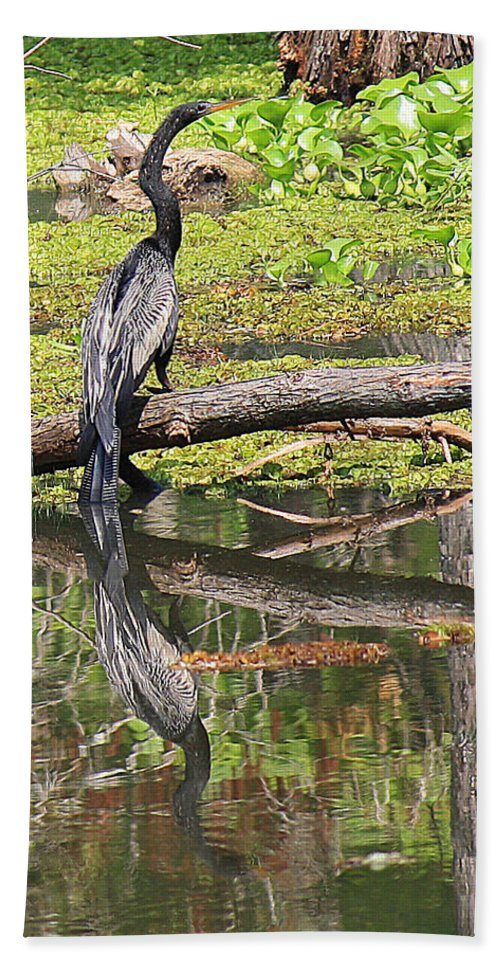 Roena King Beach Towel featuring the photograph Anhinga And Reflection by Roena King