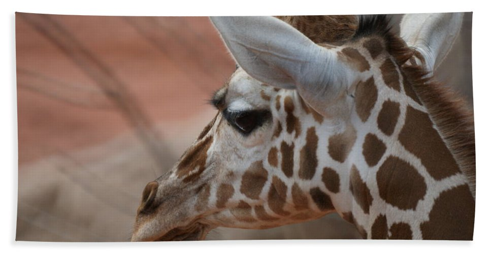 Animals Beach Towel featuring the photograph Another Giraffe by Ernie Echols