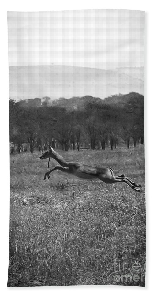 Africa Beach Towel featuring the photograph Antelope Jumping In Full Stride by Darcy Michaelchuk