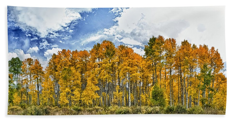 Aspen Beach Towel featuring the photograph Apen Trees In Fall by John K Sampson