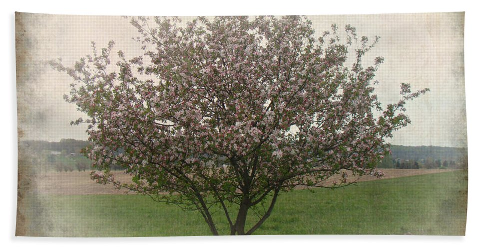 Apple Beach Towel featuring the photograph Apple Blossoms by Mother Nature