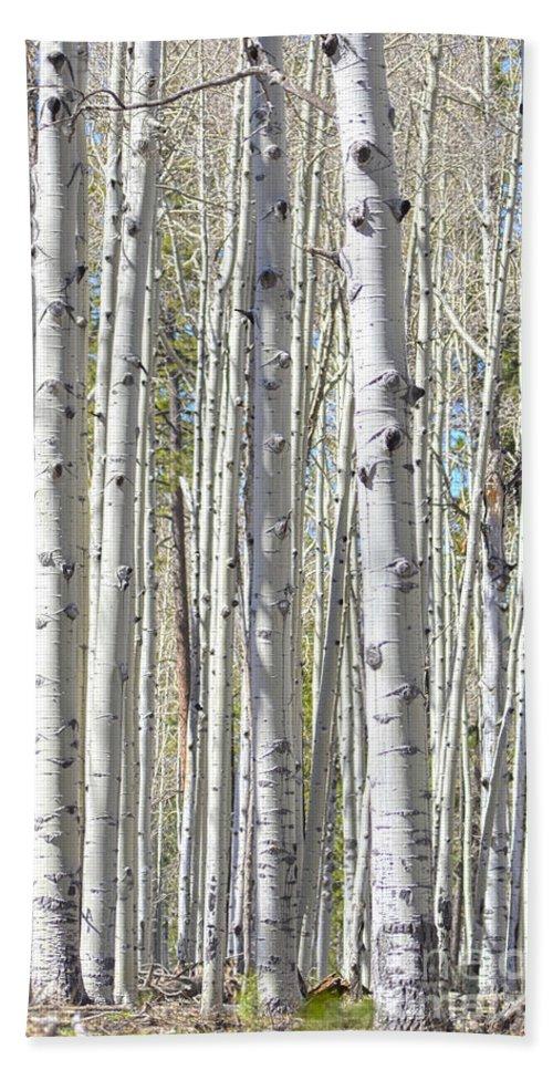 Fine Art Beach Towel featuring the photograph Aspen Grove by Donna Greene