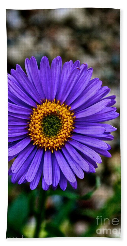 Plant Beach Towel featuring the photograph Aster by Susan Herber