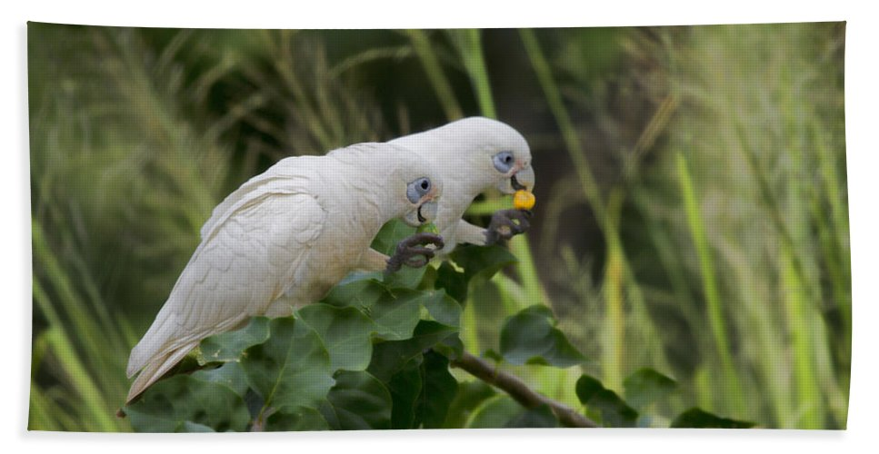 Corella Beach Towel featuring the photograph At The Dinner Table by Douglas Barnard