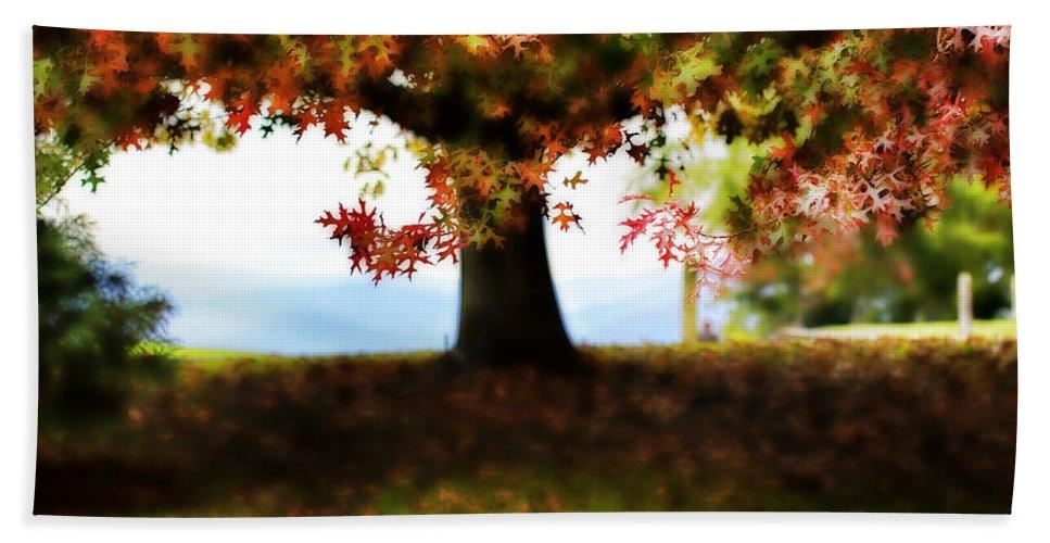 Autumn Beach Towel featuring the photograph Autumn Acorn Tree by Douglas Barnard