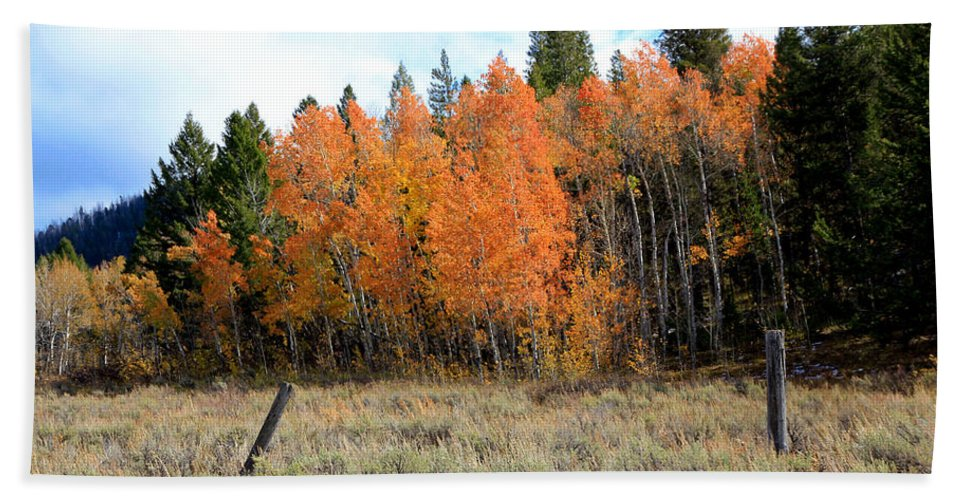 Aspen Tree Beach Towel featuring the photograph Autumn Colors by Athena Mckinzie