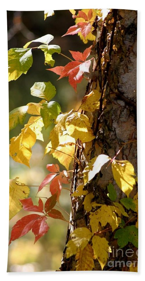 Autumn Beach Towel featuring the photograph Autumn Colors by Living Color Photography Lorraine Lynch