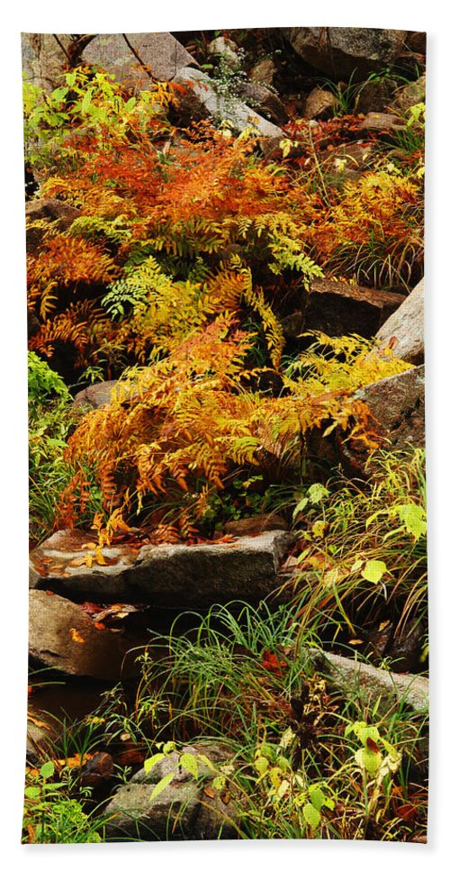Autumn Beach Towel featuring the photograph Autumn Ferns On Pickle Creek At Hawn State Park by Greg Matchick
