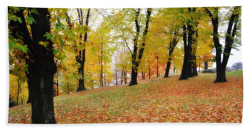 Trees Beach Towel featuring the photograph Autumn Forest by Mats Silvan
