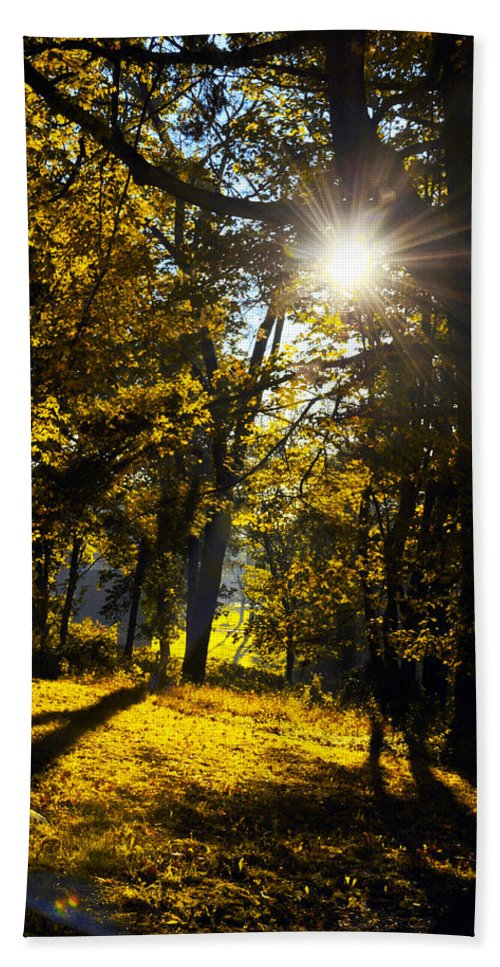 Autumn Beach Towel featuring the photograph Autumnal Morning by Bill Cannon