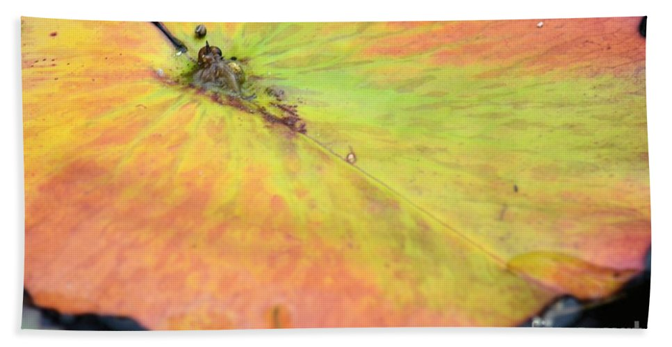 Autumn Beach Towel featuring the photograph Autumn's Pastel Pallet by Maria Urso