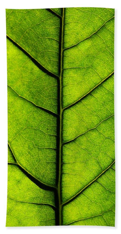 Avocado Leaf Beach Towel featuring the photograph Avocado Leaf 2 by Jessica Velasco