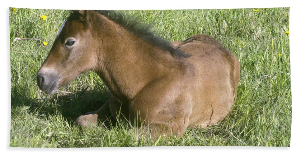 Horses.cold Beach Towel featuring the photograph Awakened by Jeff Swan